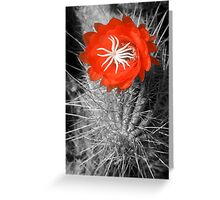 Red Cactus flower blossom Greeting Card