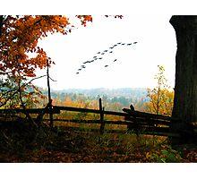 Nature's Window Photographic Print