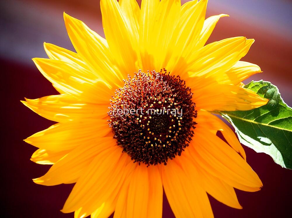 sunflower by robert murray