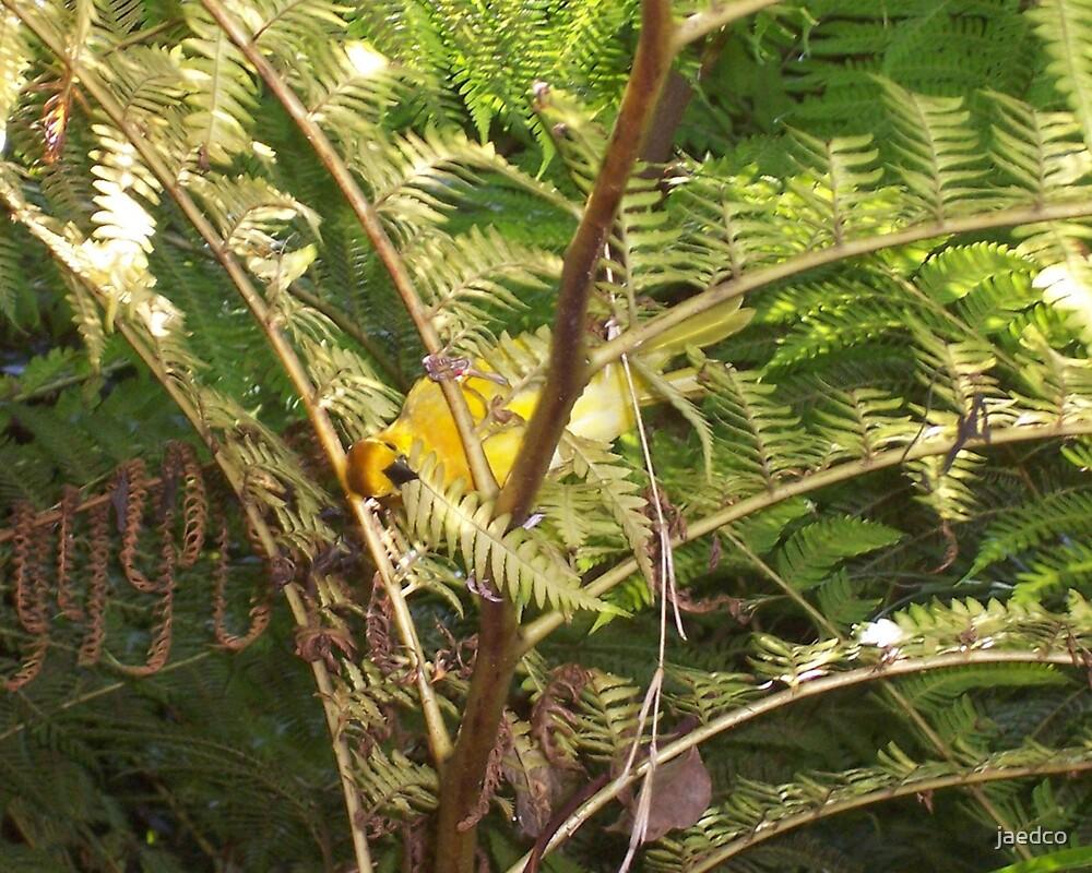 Yellow Bird by jaedco