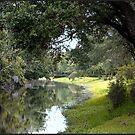 Stream at Sawgrass Park by Ginny Schmidt