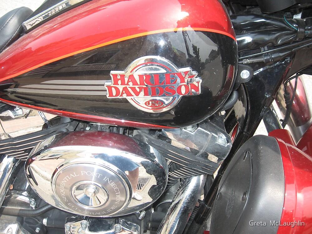Harley by Greta  McLaughlin