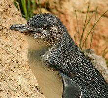 Penguin by Jason Adams