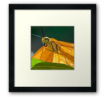 Julia Heliconian butterfly Framed Print