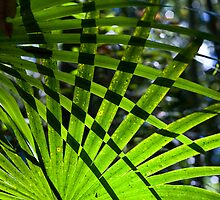 Crosshatched Palm Leaves by David de Groot