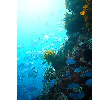Underwater Photographic Print