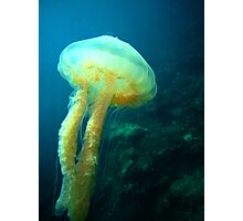 Jelly Fish Photographic Print