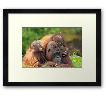 mother orangutan with her cute babies  Framed Print