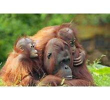 mother orangutan with her cute babies  Photographic Print