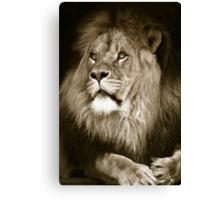 portrait of a big african male lion Canvas Print