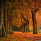 autumn colors in the forest  by Enjoylife