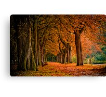 autumn colors in the forest  Canvas Print