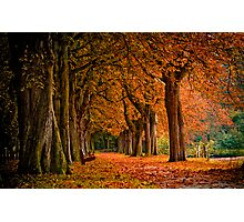 autumn colors in the forest  Photographic Print