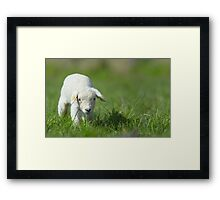 cute lamb Framed Print