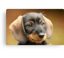 Cute little puppy Canvas Print