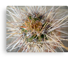 Cactus Thorns Canvas Print