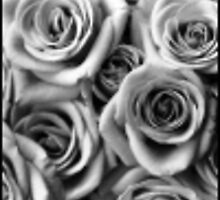 grey roses by mossa
