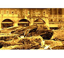 great herons on the rock  Photographic Print