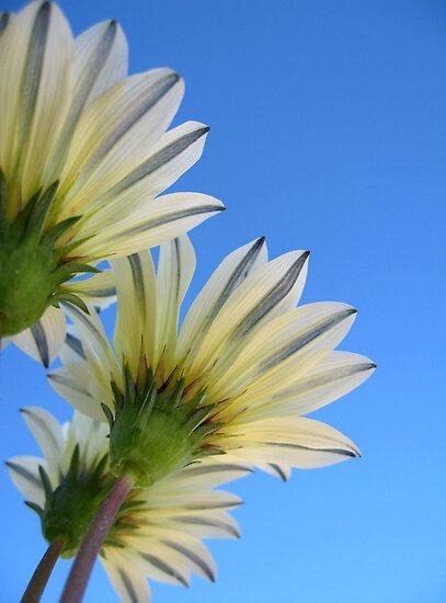 Summer Bloom by Ye Liew