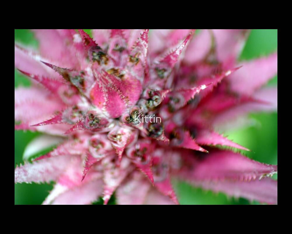 flower 02 by Kittin
