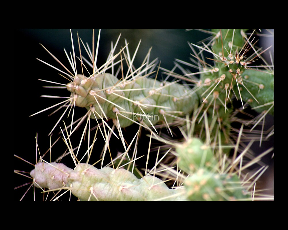 cactus 01 by Kittin
