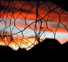 Fenced sunset by Tamsyn