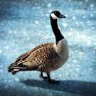 One handsome Goose by Bine