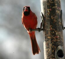 MOMMY CARDINAL by LESLIE KING