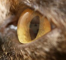 Bettys' eye by Classicperfection