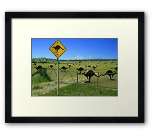 roo's in the paddock Framed Print