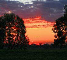 Burnt horizons by Sara Lamond