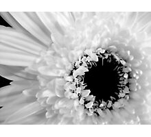Ebony & Ivory Photographic Print