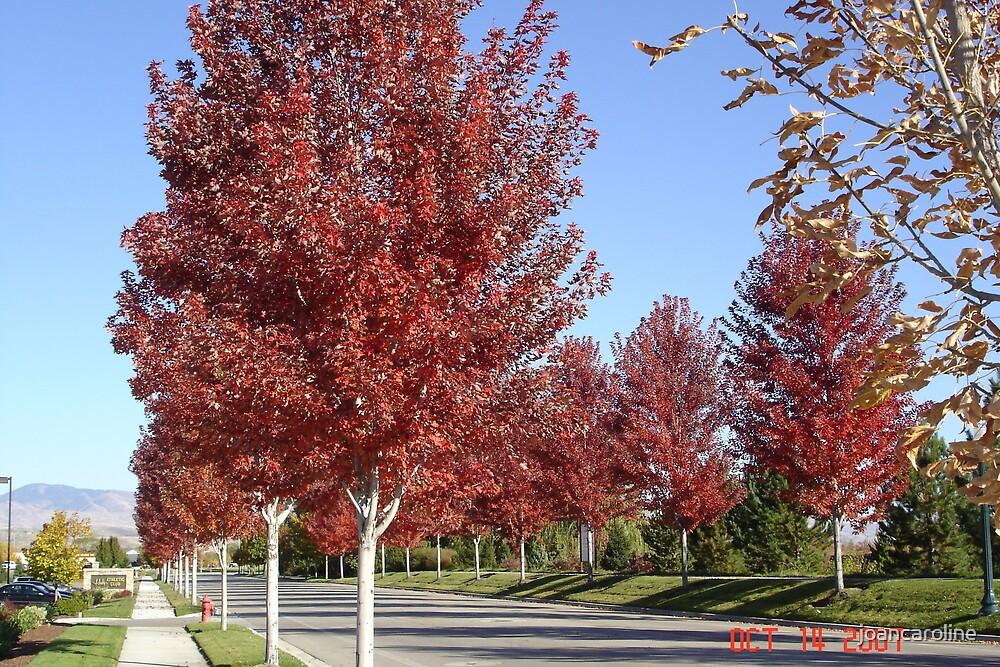 fall colors by joancaroline