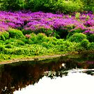 where the river runs....purple? by Katie Hoisington