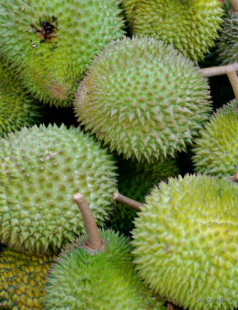 Durian Fruit by joancaroline