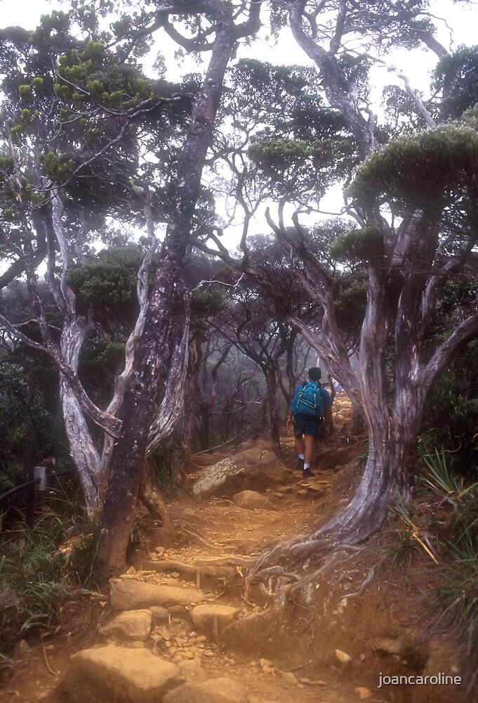mountain trek by joancaroline