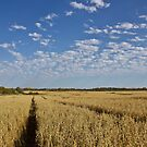 Saskatchewan - Harvest by RobertCharles