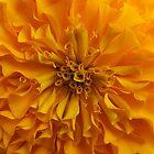 Marigold Macro by Ye Liew