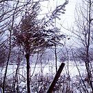 Saskatchewan - April 2014 Snow by RobertCharles