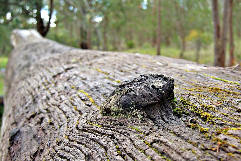 log detail by Martin Pot