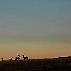 Wyoming Twilight  by Harry Oldmeadow