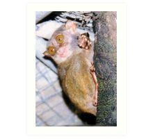 Tarsius syrichta - Philippine tarsier Art Print