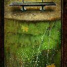 Fall... by Imber
