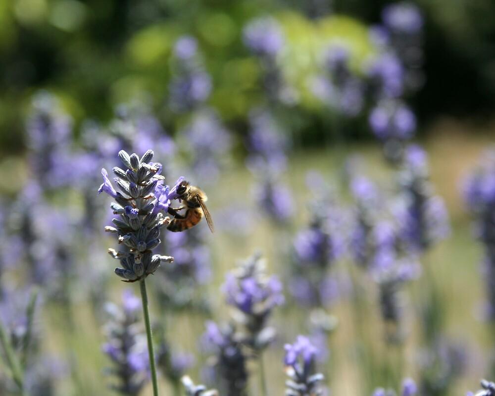 Mr Bee by Cassandra Mann