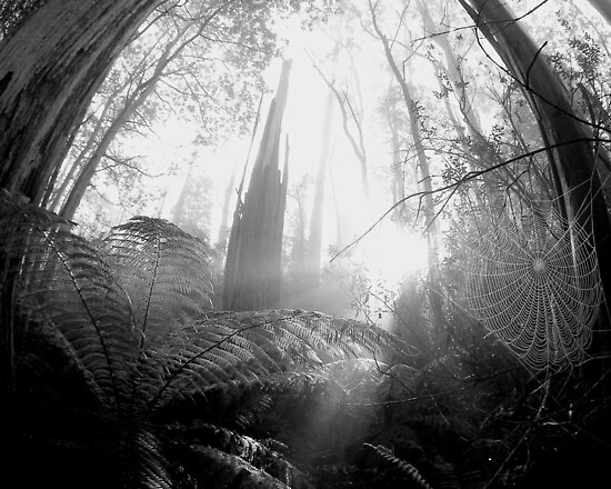 Enchanted Web by Jarrod Lees