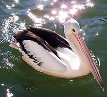 Sparkling Pelican by PopPete