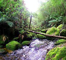 Toronga River Bend... by Jarrod Lees