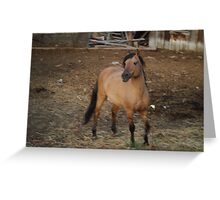 Horse Kiger 1  Greeting Card