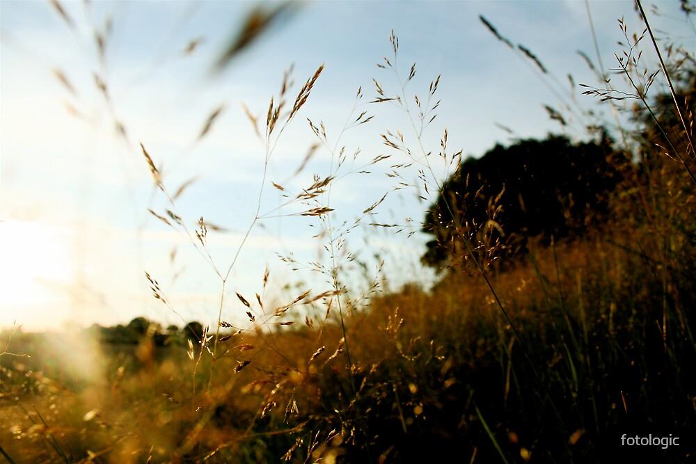 Rabbit's eye view by fotologic