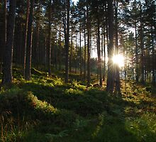 Sunlit Forest // Norway by Memento Mori Studio